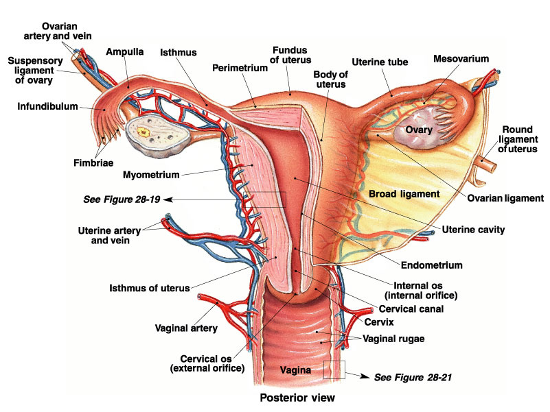 how to take care of the male reproductive system
